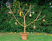 RUSTIC BIRD FEEDER: BRANCH CONCRETED INTO TERRACOTTA Pot AND ADORNED with FIR CONES, BOWS of HAIRY TWINE, ROSE HIPS, APPLES, PEANUTS AND A FAT Ball