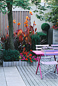 Blue Cafe CHAIRS, Pink WOODEN TABLE, DECKING AND GALVANISED TRAY PLANTED with SUCCULENTS, with Canna IN BACKGROUND: Designer: STEPHEN WOODHAMS
