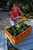 Nancy WATERING LETTUCES AND PARSLEY IN THE VEGETABLE BOX. Clare MATTHEWS PROJECT