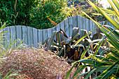 SEASIDE Garden: Blue WOODEN WAVE SHAPED FENCE SURROUNDED by PHORMIUM PURPUREUM AND PHORMIUM TENAX VARIEGATUM. Designer: Mark LAURENCE
