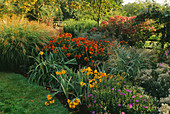 PETTIFERS, OXFORDSHIRE: THE AUTUMN BORDER with MISCANTHUS YAKUSHIMA DWARF, Aster SONORO, CROCOSMIA 'WALBERTON Yellow', EUPATORIUM PURPUREUM 'Riesenschirm' AND HELENIUM