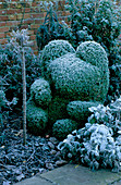 West Green HOUSE Garden, Hampshire: CLIPPED Box TOPIARY Teddy BEAR IN THE ALICE IN WONDERLAND Garden IN Frost IN Winter