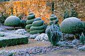 West Green HOUSE Garden, Hampshire: CLIPPED Box TOPIARY SHAPES IN THE ALICE IN WONDERLAND Garden IN Frost IN Winter