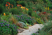 Lady Farm, Somerset: THE Steppe AREA with KNIPHOFIA, GERANIUM 'JOHNSONS Blue' AND ASPHODELINE LUTEA