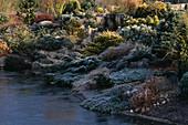HEBE, EUPHORBIA, CONIFERS AND CYCLAMEN IN Frost Beside THE POOL. JOHN MASSEYS Garden, WORCESTERSHIRE