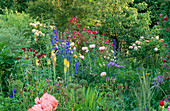 WOODCHIPPINGS, NORTHANTS: THE Long BORDER with ROSES, ORIENTAL POPPIES,CIRSIUM AND KNIPHOFIA