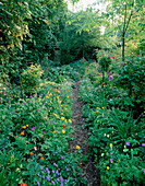 WOODCHIPPINGS, NORTHANTS: A PATH THROUGH THE Old Orchard LINED with Single AND Double Forms of MECONOPSIS CAMBRICA, Viola AND GERANIUM NODOSUM