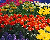 Keukenhof GARDENS, Holland: SPRING BORDER of Hyacinthus, Tulipa AND Fritillaria IMPERIALIS 'LUTEA'