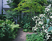 Amsterdam: PRIVATE Garden - PATH SURROUNDED by FERNS, Philadelphus AND ROBINIA