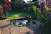 Designer: SHEILA STEDMAN - VIEW From THE BACK of THE HOUSE with RECTANGULAR Pool, LAWN, WISTERIA AND Acer IN A Pot