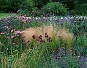 Designer Clare MATTHEWS - Devon Garden - THE WALLED Garden with PEROVSKIA ATRIPLICIFOLIA 'Blue SPIRE', ALLIUM SPHAEROCEPHALON, STIPA TENUISSIMA, Achillea 'LOVE Parade'