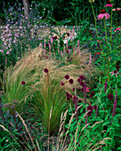 Designer Clare MATTHEWS - Devon Garden - THE WALLED Garden with STIPA TENUISSIMA, ALLIUM SPHAEROCEPHALUM, Echinacea PURPUREA
