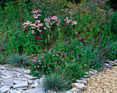 Designer Clare MATTHEWS - Devon Garden - THE WALLED Garden with SLATE, Scabiousa COLUMBARIA 'NANA', Achillea 'LOVE Parade' AND ALLIUM 'SPAEROCEPHALON'