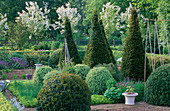 PETTIFERS Garden, OXFORDSHIRE:THE Parterre IN SPRING with MALUS HUPEHENSIS Behind