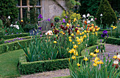 THE ABBEY HOUSE, Wiltshire: Iris GROWING IN Box EDGED BED