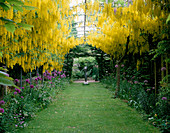 THE ABBEY HOUSE, Wiltshire: THE LABURNUM ARCH IN SPRING with ALLIUM AND 'MOTHER AND CHILD' SCULPTURE by Bob ALLEN