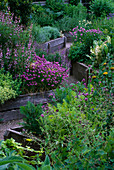 THE ABBEY HOUSE, Wiltshire: RAISED WOODEN BEDS IN THE Herb Garden with FLOWERING CHIVES