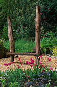 Designer: Clare MATTHEWS: THE WALLED Garden, Devon: Mariette Tulipa IN Front of WOODEN SEAT