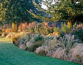 JOHN MASSEY'S Garden - AUTUMN BORDER with STIPA TENUISSIMA, Echinacea PURPUREA AND CALAMAGROSTIS 'Karl FOERSTER'