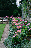 ST. MICHAEL'S HOUSE, Kent: SPRING BORDER with Tulipa 'Ballade' AND 'New DESIGN' UNDERPLANTED with Sweet ALLYSUM AND STACHYS BYZANTINA