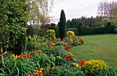 ST MICHAEL'S HOUSE, Kent: SPRING BORDER with Orange AND Red Tulipa, LAWN AND YEW HEDGING