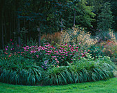 BORDER Beside WOODLAND with Echinacea, CALAMAGROSTIS 'Karl FOERSTER' AND STIPA GIGANTEA. Designer: DUNCAN HEATHER, GREYSTONE Cottage, OXFORDSHIRE