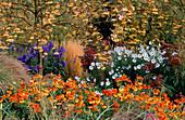 PETTIFERS Garden, OXFORDSHIRE: SORBUS 'Joseph Rock', CALAMAGROSTIS 'Karl FOERSTER', ACONITUM CARMICHAELII 'ARENDSII', CHRYSANTHEMUM ULIGINOSUM, HELENIUM 'SAHINS EARLY FLOWERER'
