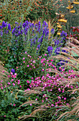 PETTIFERS Garden, OXFORDSHIRE: AUTUMN BORDER with ACONITUM CARMICHAELII 'ARENDSII', SORBUS 'Joseph Rock' AND Anemone Var JAPONICA 'PAMINA'