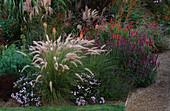 PENNISETUM SETACEUM, Agastache RUGOSA HYBRID. MISCANTHUS 'Kaskade', PENSTEMON. MARCHANTS Hardy PLANTS, Sussex