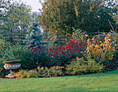 AUTUMN BORDER with ABIES CONCOLOR AND DAHLIA 'BISHOP of Auckland' & 'BISHOP of LLANDAFF' & Hardy FUSCHIA. Designer: JOHN MASSEY