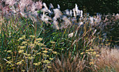 GRASSES SWAYING IN THE BREEZE. GOODNESTONE Park, Kent