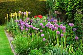 HERBACEOUS BORDER with ALLIUM ROSENBACHIANUM, ASPHODELINE LUTEA, Iris SIBERICA AND ORIENTAL POPPIES. JANET CROPLEY Garden, HILL GROUNDS, NORTHAMPTONSHIRE