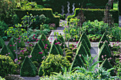 RIDLER'S Garden, SWANSEA, Wales: VIEW ACROSS THE VEGETABLE Garden with ALLIUMS, Box CONES, FIGS, YEW HEDGES AND A SCULPTURE by Helen SINCLAIR. Designer: TONY RIDLER