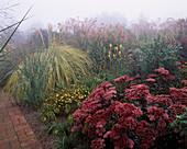 MISTY AUTUMN MORNING at MARCHANTS Hardy PLANTS, Sussex: BORDER with CORTADERIA SELLOANA AUREOLINEATA AND SEDUM MATRONA