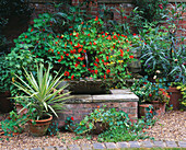 HALL Farm, Lincolnshire: Water Feature with TROUGH PLANTED with SOLANUM LAINIATUM AND Tropaeolum 'HERMINE GRASSHOFF'
