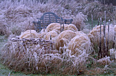 PARSONAGE, WORCESTERSHIRE: THE PRAIRIE IN Winter with FROSTY Blue WOODEN BENCH, STIPA TENUISSIMA AND SEDUM MATRONA.