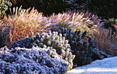 Garden DESIGNED by DUNCAN HEATHER: FROSTY BORDER with EUPHORBIA AND GRASSES