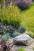 RICHARD JACKSONS Garden: EVENING Light On LAWN AND GRAVEL BORDER PLANTED with Nepeta 'WALKERS LOW', SISYRINCHIUM STRIATUM, FESTUCA GLAUCA, SALVIA. Designer: Clare MATTHEWS