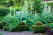 VEDDW HOUSE Garden, GWENT, Wales: DESIGNERS ANNE WAREHAM AND CHARLES HAWES - THE VEGETABLE Garden with CARDOONS AND HEUCHERA