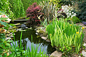 HUNMANBY Grange, Yorkshire: POND PLANTING with Iris PSEUDACORUS VARIEGATA, Water Forget-Me-Nots, BERBERIS 'Darts Red Lady' AND PAEONIA