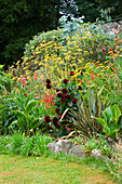 YEWBARROW HOUSE GARDENS, CUMBRIA - Hot BORDER with Canna, DAHLIA 'ARABIAN NIGHT' AND PHORMIUM