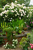 Amelia HEATH Garden, 1, CROSS VILLAS, SHROPSHIRE: RAISED POND, Pool PLANTED with SARRACENIAS AND SURROUNDED by ROSES, Achillea AND ALCHEMILLA MOLLIS