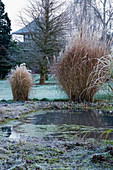 WOODPECKERS, WARWICKSHIRE, Winter: VIEW ACROSS FROSTY Pool / POND THROUGH MISCANTHUS TO WOODEN SUMMERHOUSE IN Frost