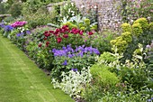 BIRTSMORTON HALL, WORCESTERSHIRE: HERBACEOUS BORDER IN THE WALLED Garden with EUPHORBIA, STACHYS, CARDOON, 'GERANIUM 'JOHNSONS Blue' PEONY 'BETHCAR' AND PEONY 'STREPHON