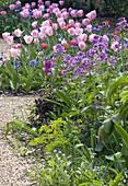 KELMARSH HALL, NORTHAMPTONSHIRE: Tulipa Beside THE WALLED Garden