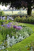 THE Old RECTORY, HASELBECH, NORTHAMPTONSHIRE: SUMMER BORDER Beside GRASS with ALLIUM CHRISTOPHII, GERANIUM JOHNSONS Blue, STACHYS AND Iris 'JANE PHILLIPS'