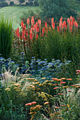PETTIFERS, OXFORDSHIRE: BORDER with KNIPHOFIA TIMOTHY, Achillea TERRACOTTA, STIPA TENUISSIMA AND ERYNGIUM 'PICOS Blue'