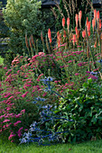 PETTIFERS, OXFORDSHIRE: BORDER with Achillea SAMMETRIESE, KNIPHOFIA TIMOTHY AND ERYNGIUM 'PICOS Blue'