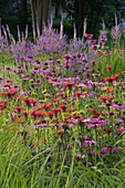THE Old RECTORY, MIXBURY, NORTHANTS. Designer: Angel Collins: LATE PERENNIAL BORDER with Echinacea, MONARDA AND VERONICASTRUM