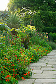 WILKINS PLECK, Staffordshire: Hot BORDER with STONE PATH AND Tropaeolum